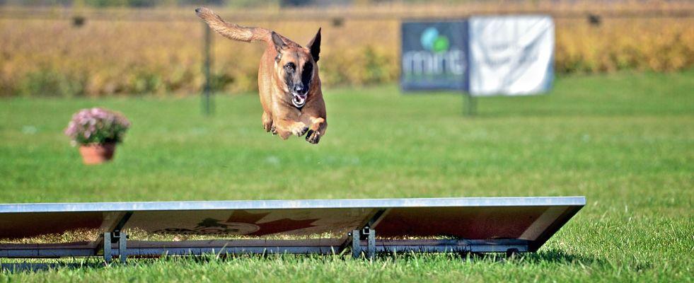 CRA Canada Cup - Long Jump